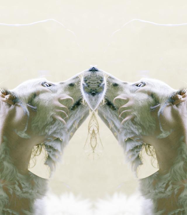 Idit Nissenbaum (idit.photographer) - I Am You