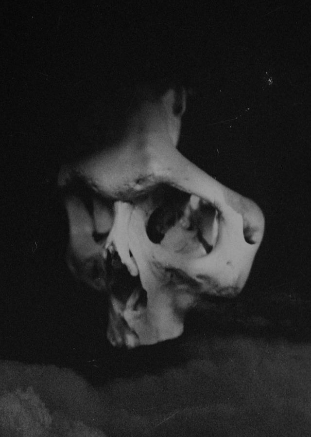 Corpus Vertebrae (corpus.vertebrae) - self-portrait 1
